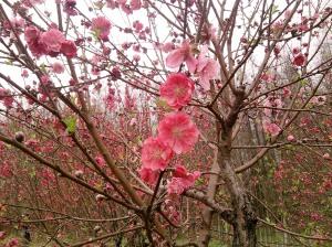 Jiyuan Ren - Peach Blossom Island(Seven Star Cave)